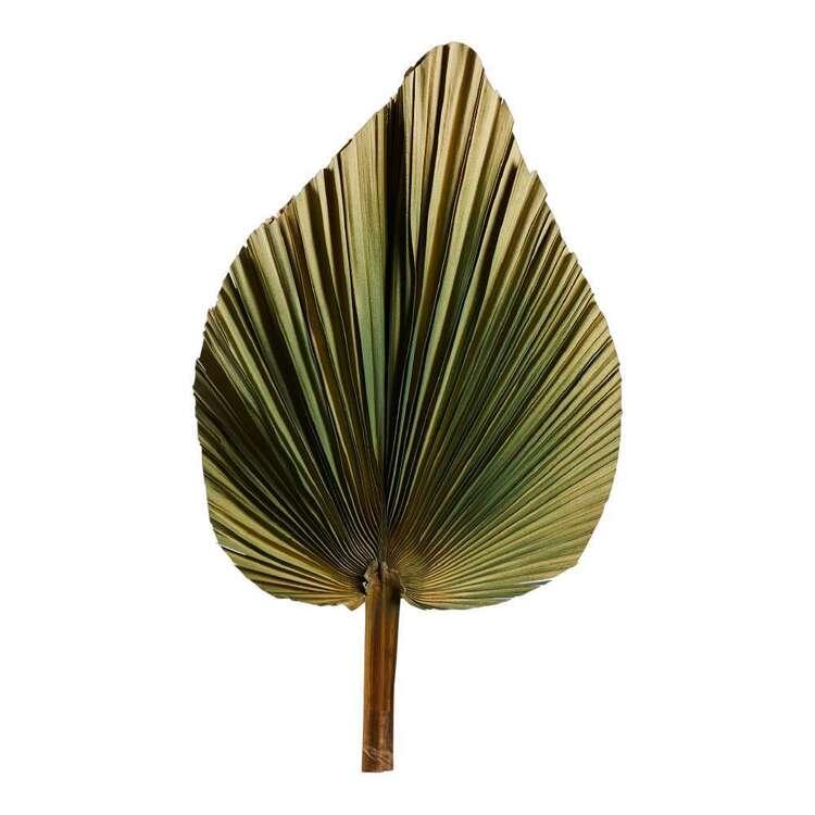 60 cm Dried Natural Fan Palm