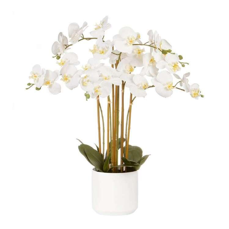 Botanica Jumbo 6 Stem Orchid
