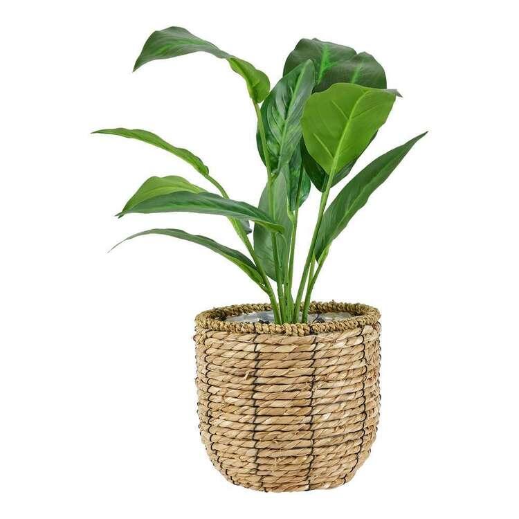 Living Space Ivy Leaves In Rattan Basket
