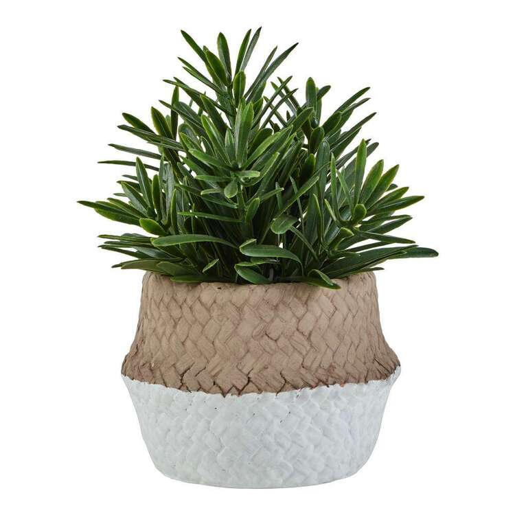 Living Space Yacca In Cement Pot