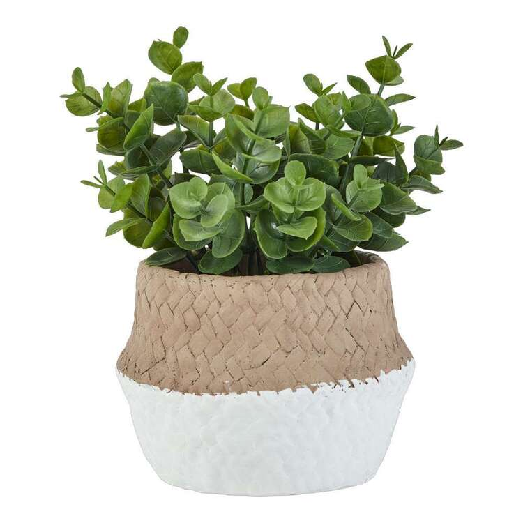 Living Space Eucalyptus In Cement Pot