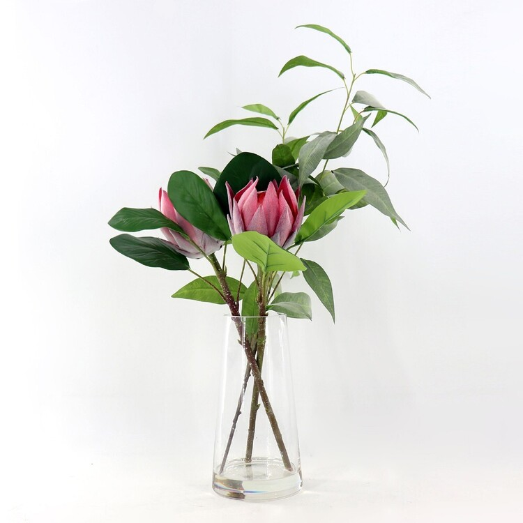 Living Space Potted Native Protea