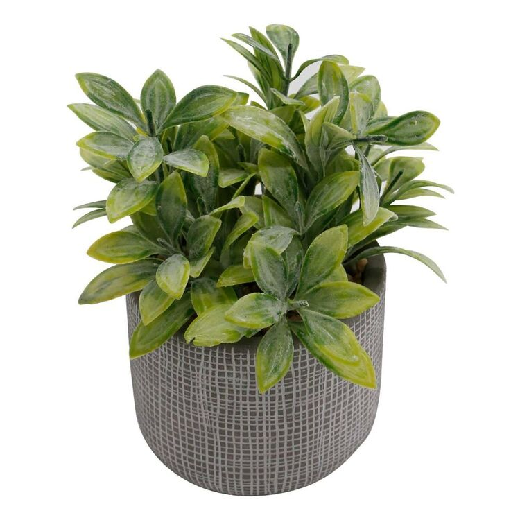 Ombre Home Country Living Succulent In Pot