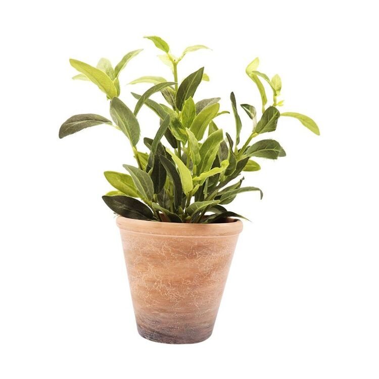 Living Space Greenery Leaves In Pot