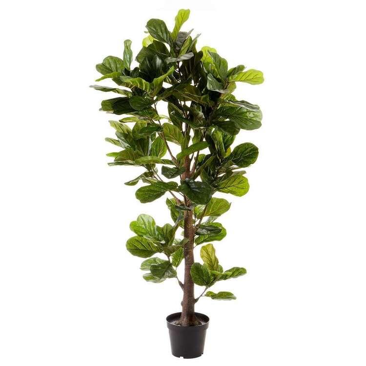 Cooper & Co Premium 190 cm Fiddle Leaf Plant