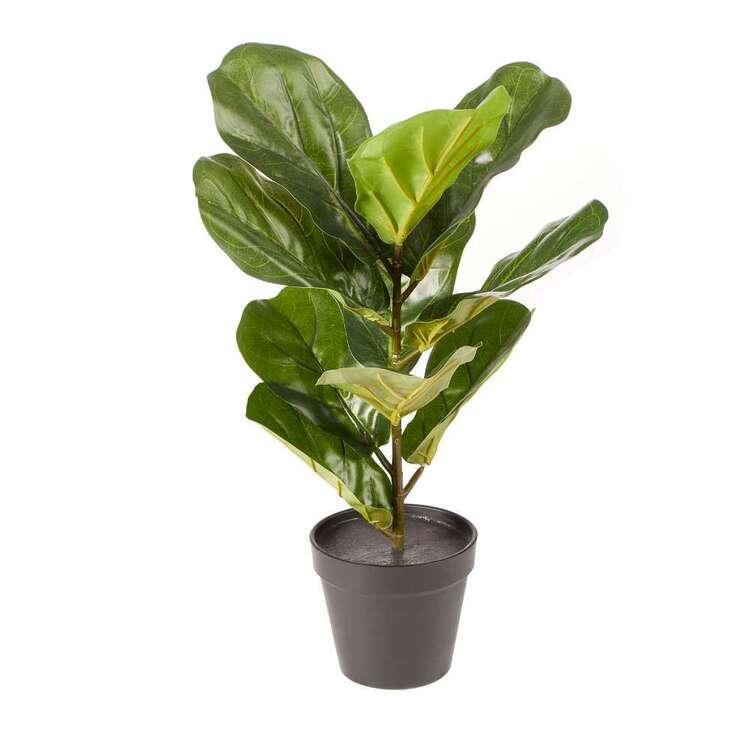 Cooper & Co Premium 50 cm Fiddle Leaf Plant