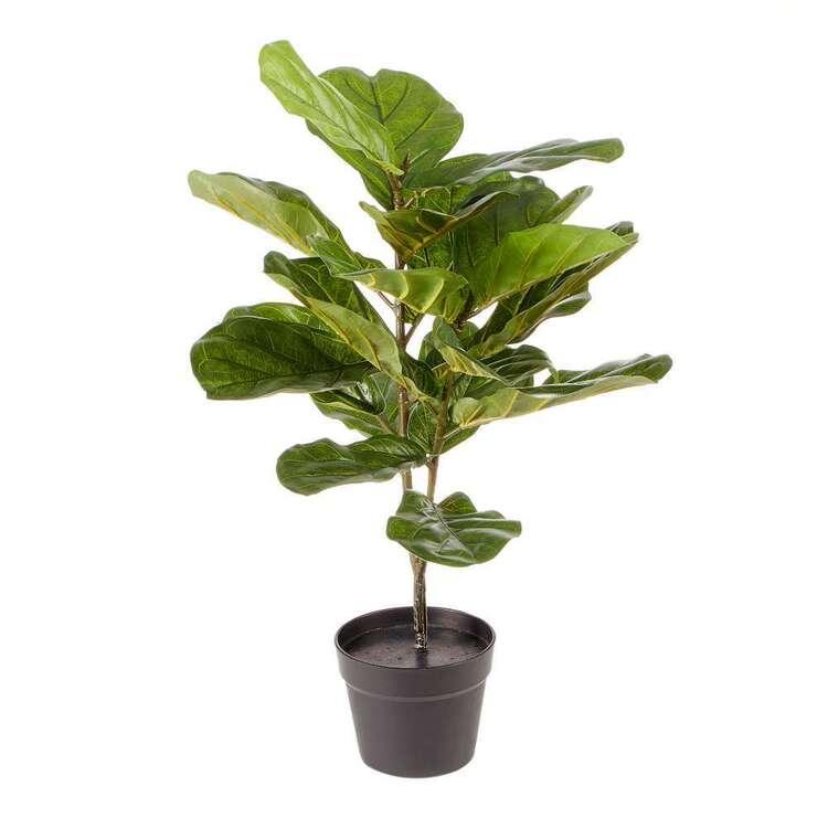 Cooper & Co Premium 75 cm Fiddle Leaf Plant