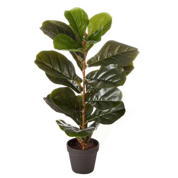 Cooper & Co 60 cm Botanica Fiddle Leaf Plant