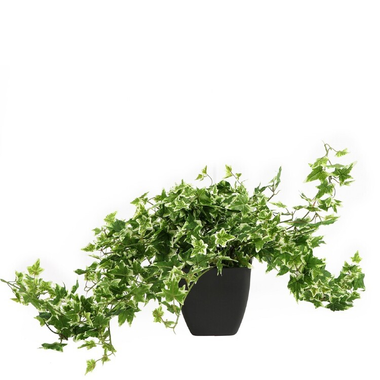 Cooper & Co Ivy In Black Pot