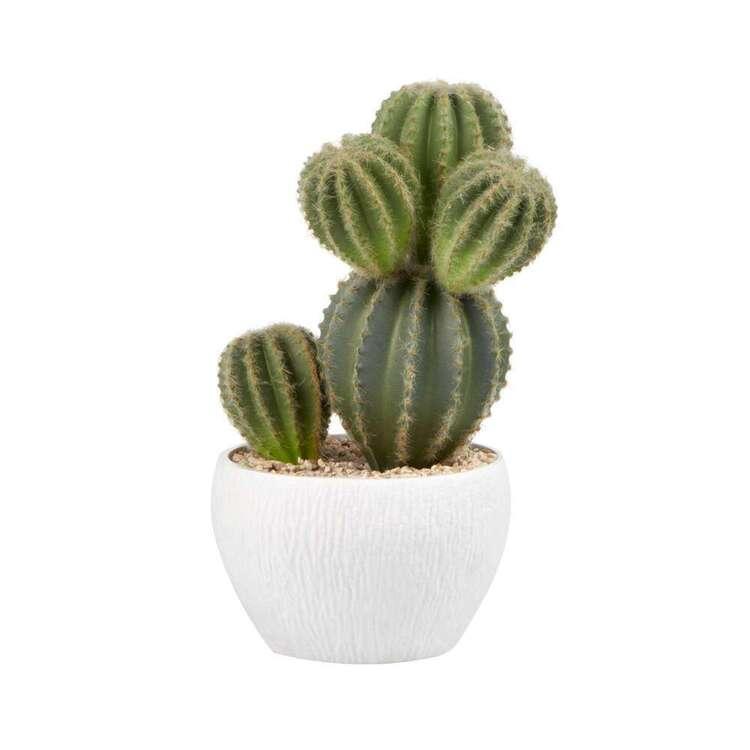 Cooper & Co Cactus In Pot