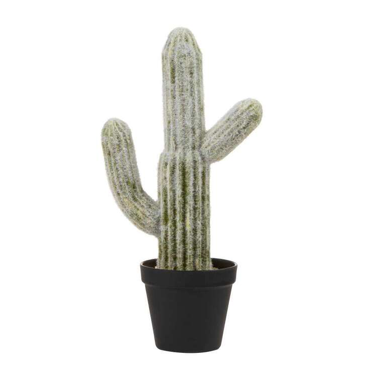 Cooper & Co 41 cm Mexican Cactus In Pot