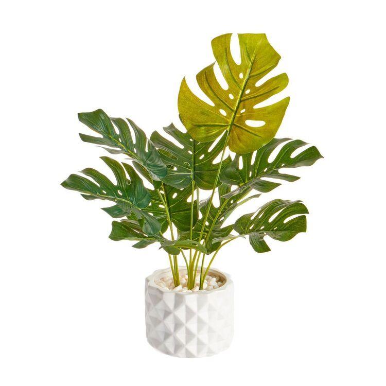 Cooper & Co 42 cm Monstera Plant