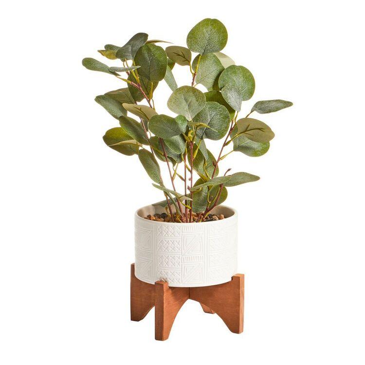 Cooper & Co 39 cm Money Plant
