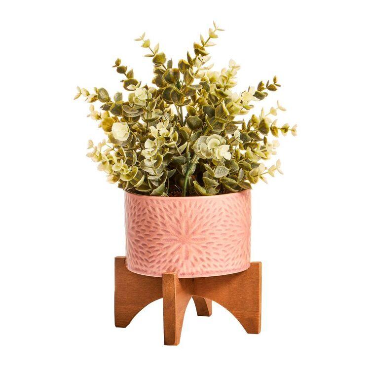Cooper & Co Succulent In Ceramic Pot