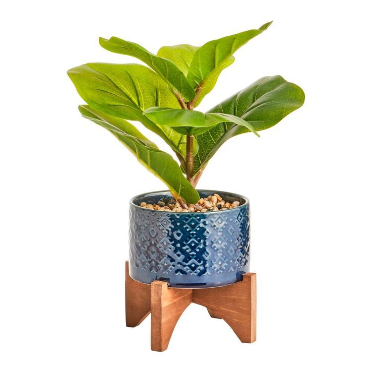 Cooper & Co 35 cm Taro Plant In Ceramic Pot