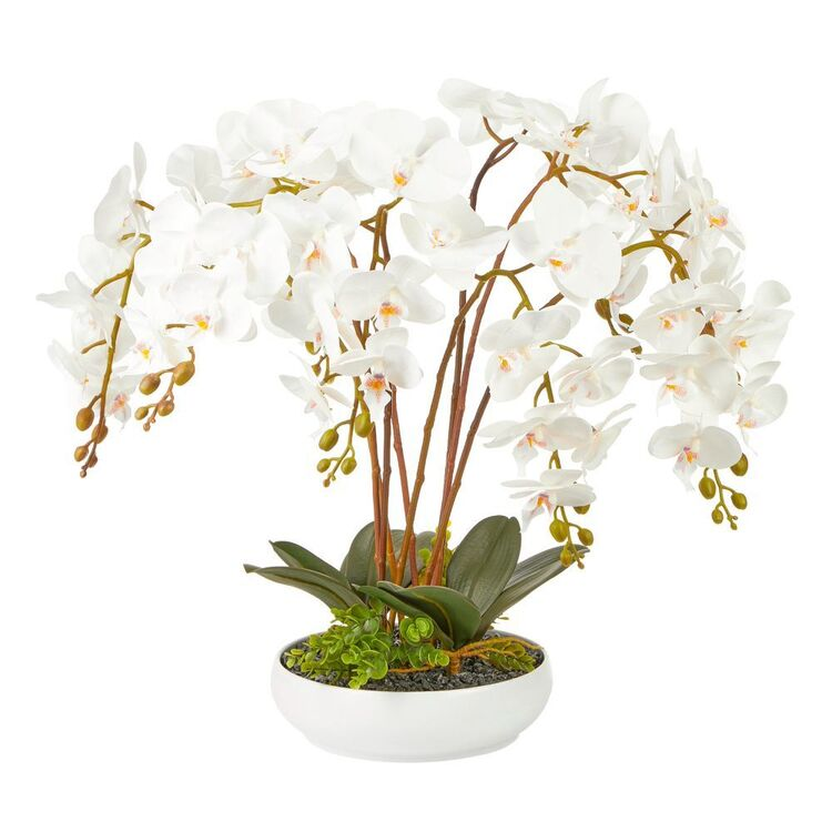 Cooper & Co 60 cm Orchid Potted Plant
