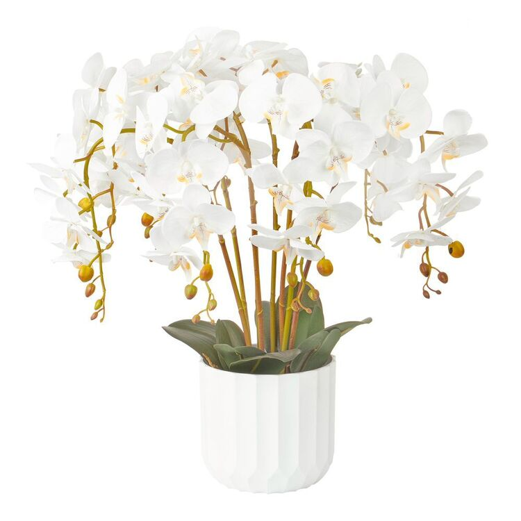 Cooper & Co 55 cm Orchid Potted Plant