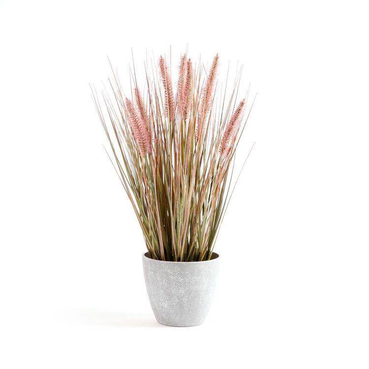 Cooper & Co 46 cm Onion Grass Plant