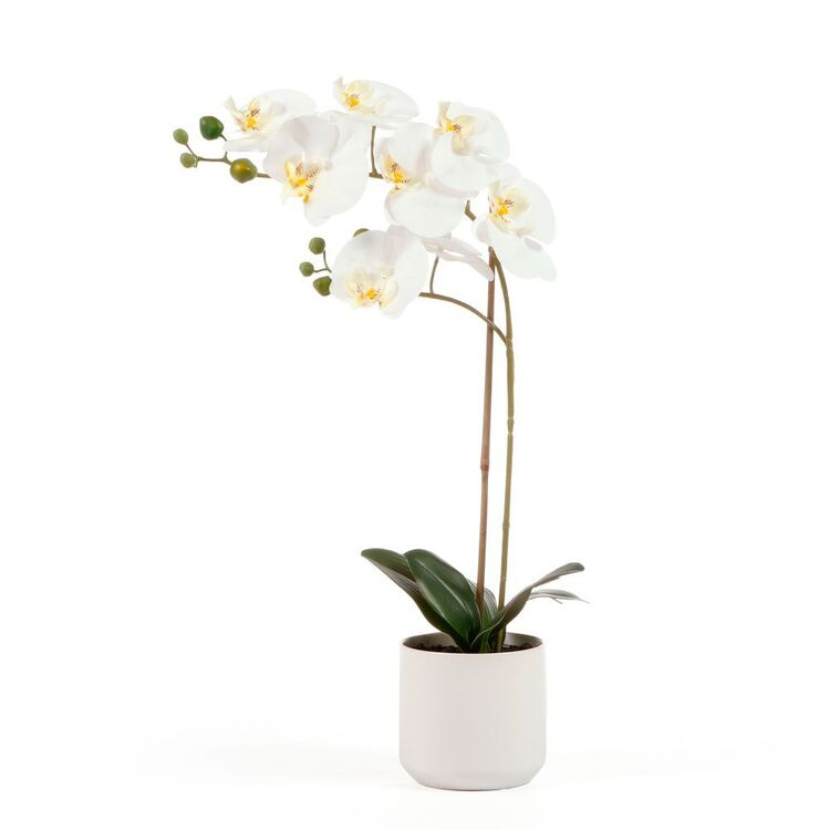 Cooper & Co 53 cm Orchid Potted Plant