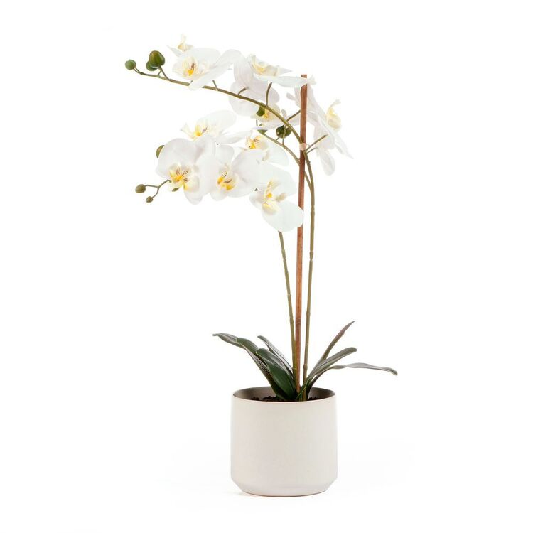Cooper & Co 61 cm Orchid Potted Plant