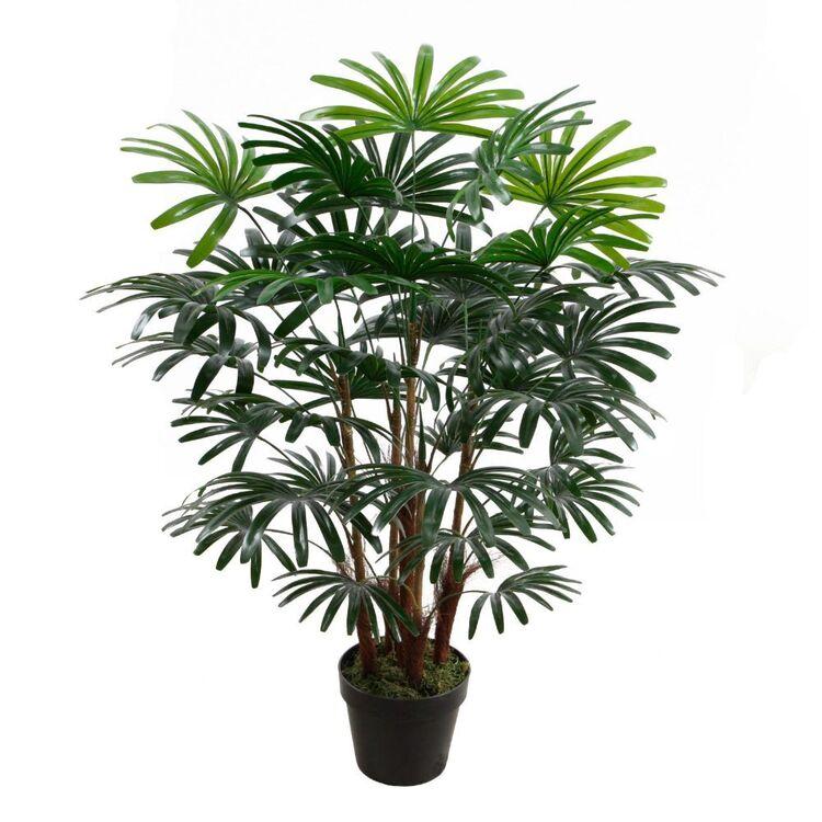 Cooper & Co 90 cm Rhapis Palm In Pot