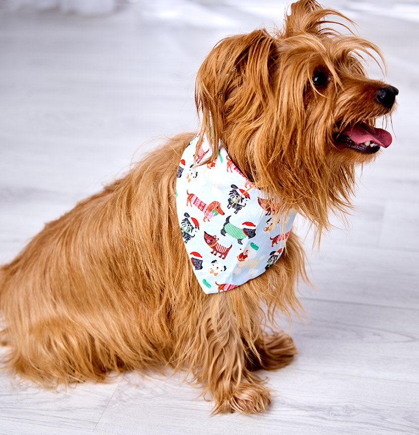 Dog Bandana Project