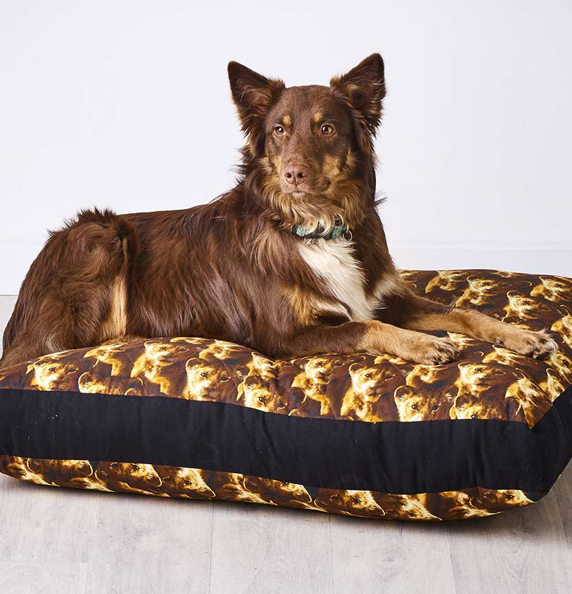 Lion King Dog Bed Project