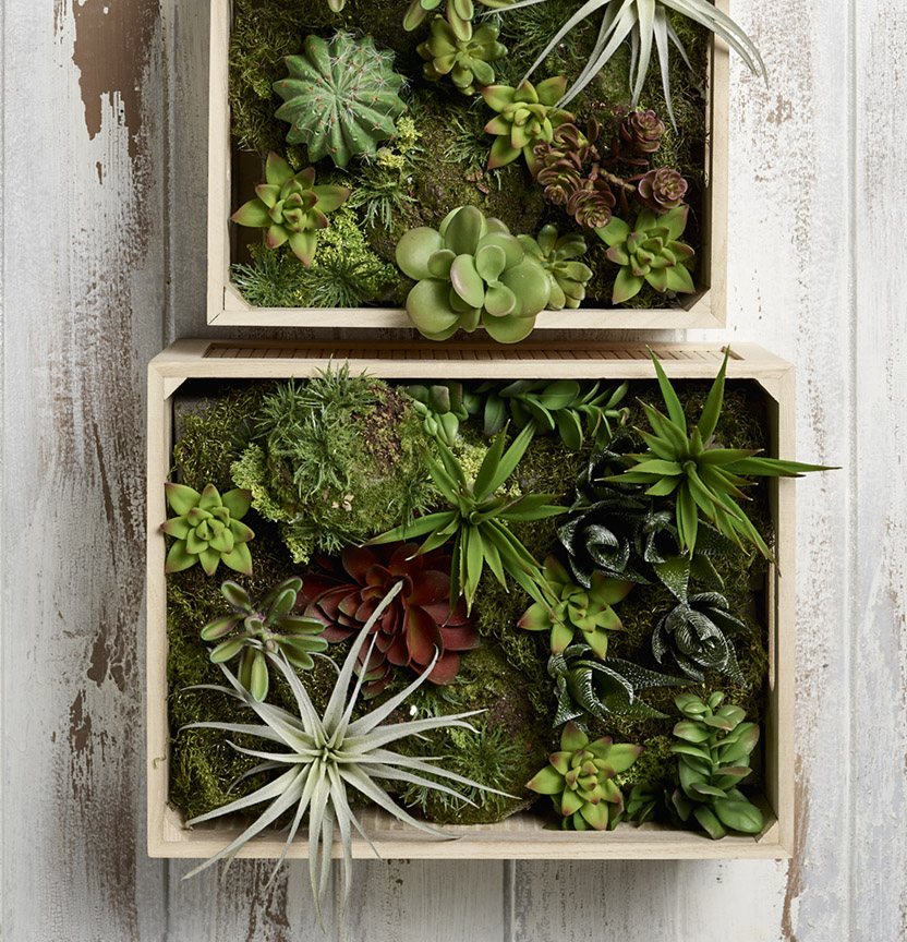 Succulent Moss Box Project